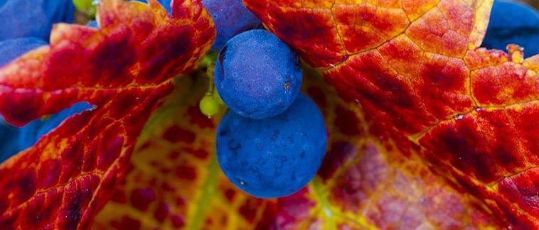 wine_cab_02